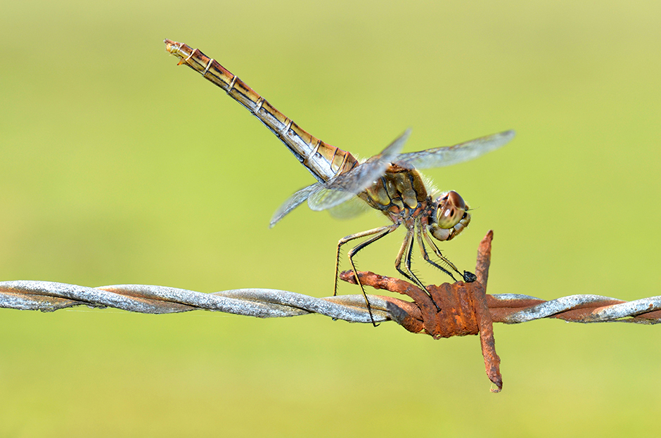 Dragonfly_10